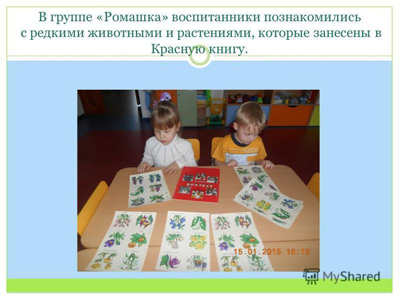 В группе «Ромашка» воспитанники познакомились с редкими животными и растениями, которые занесены в Красную книгу.