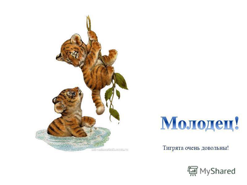 Тигрята очень довольны!