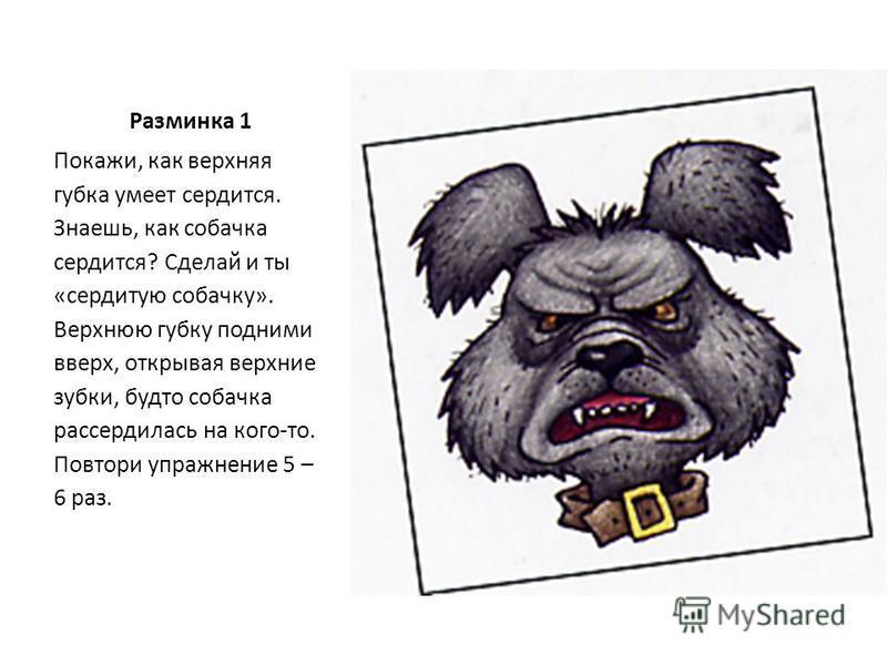 Разминка 1 Покажи, как верхняя губка умеет сердится. Знаешь, как собачка сердится? Сделай и ты «сердитую собачку». Верхнюю губку подними вверх, открывая верхние зубки, будто собачка рассердилась на кого-то. Повтори упражнение 5 – 6 раз.
