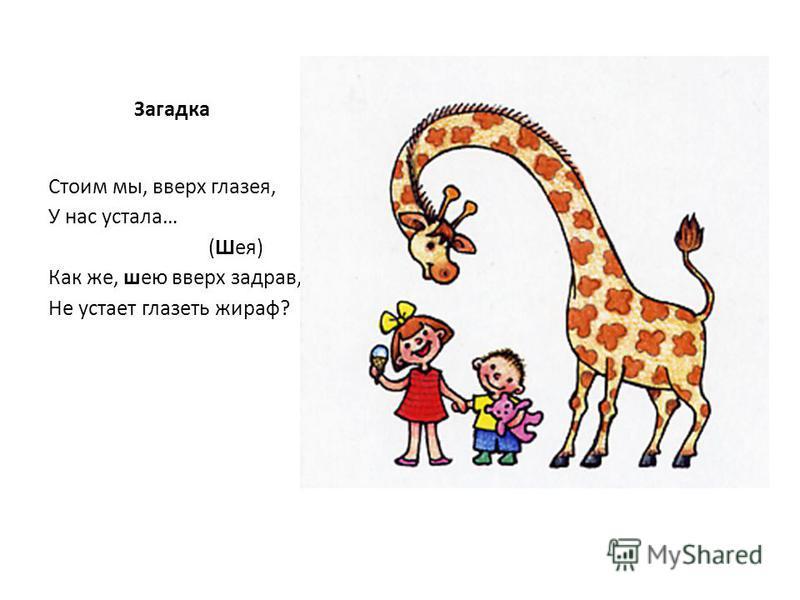 Загадка Стоим мы, вверх глазея, У нас устала… (Шея) Как же, шею вверх задрав, Не устает глазеть жираф?