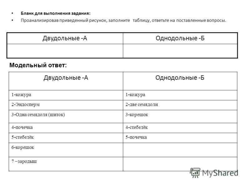 Бланк для выполнения задания: Проанализировав приведенный рисунок, заполните таблицу, ответьте на поставленные вопросы. Двудольные -АОднодольные -Б Модельный ответ: Двудольные -АОднодольные -Б 1-кожура 2-Эндосперм 2-две семядоли 3-Одна семядоля (щито