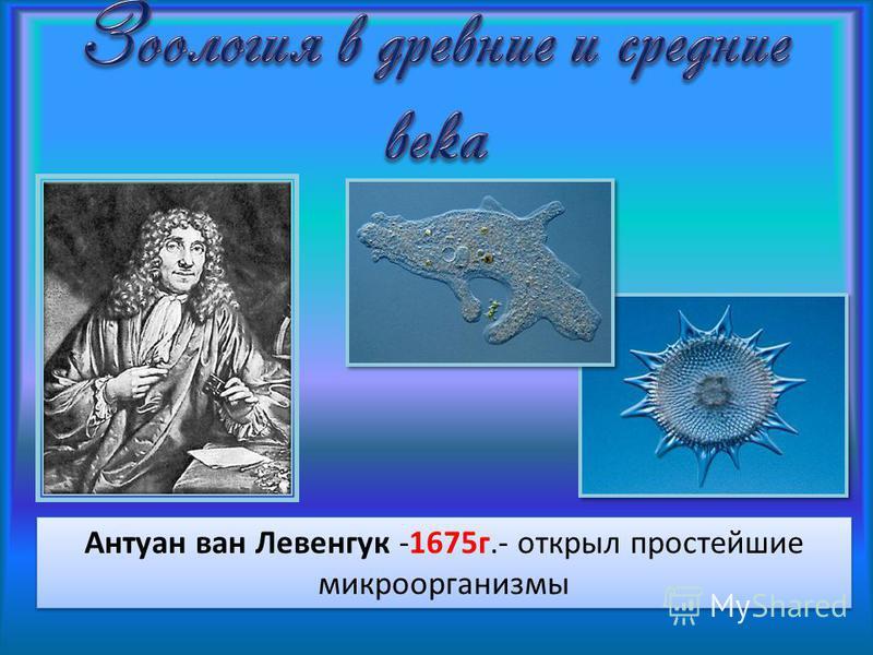 Антуан ван Левенгук -1675 г.- открыл простейшие микроорганизмы