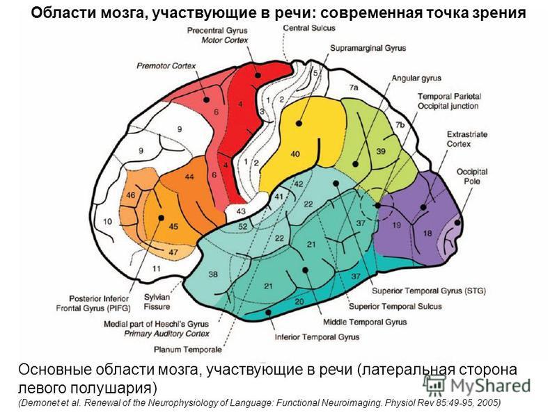 Основные области мозга, участвующие в речи (латеральная сторона левого полушария) (Demonet et al. Renewal of the Neurophysiology of Language: Functional Neuroimaging. Physiol Rev 85:49-95, 2005) Области мозга, участвующие в речи: современная точка зр
