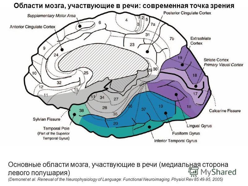 Основные области мозга, участвующие в речи (медиальная сторона левого полушария) (Demonet et al. Renewal of the Neurophysiology of Language: Functional Neuroimaging. Physiol Rev 85:49-95, 2005) Области мозга, участвующие в речи: современная точка зре