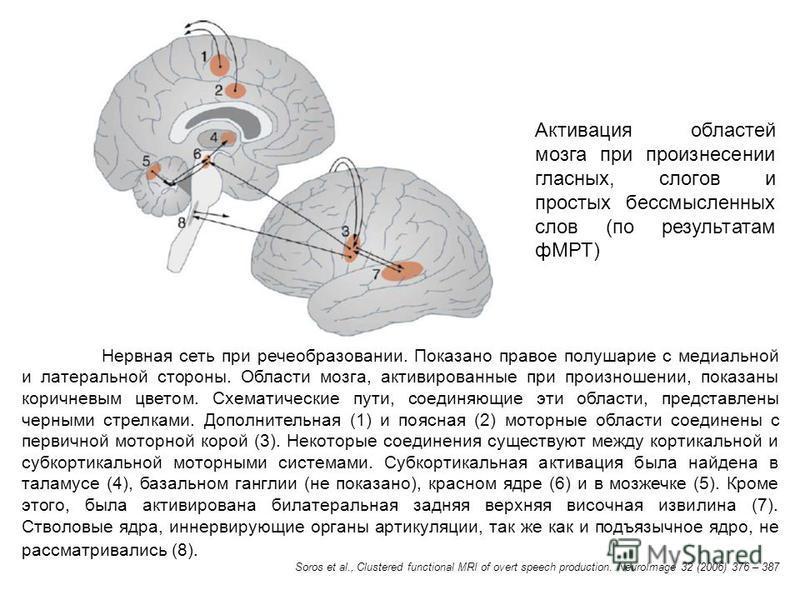 Активация областей мозга при произнесении гласных, слогов и простых бессмысленных слов (по результатам фМРТ) Нервная сеть при речеобразовании. Показано правое полушарие с медиальной и латеральной стороны. Области мозга, активированные при произношени