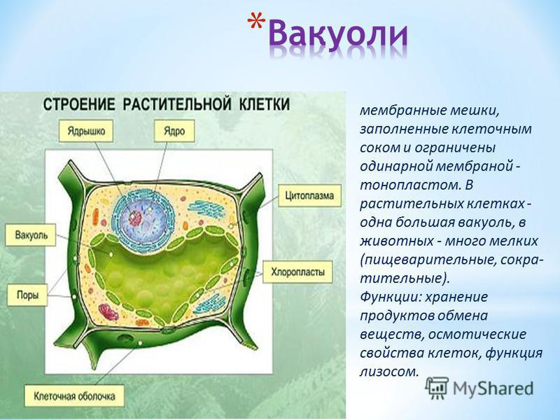 * сферический одномембранный органоид, содержащий каталазу фермент, расщепляющий пероксид водорода. * Функция: интоксикация веществ, окислительные реакции. Много в клетках печени.