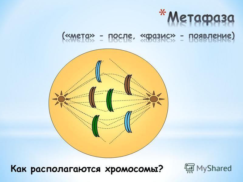 Опишите состояние клетки