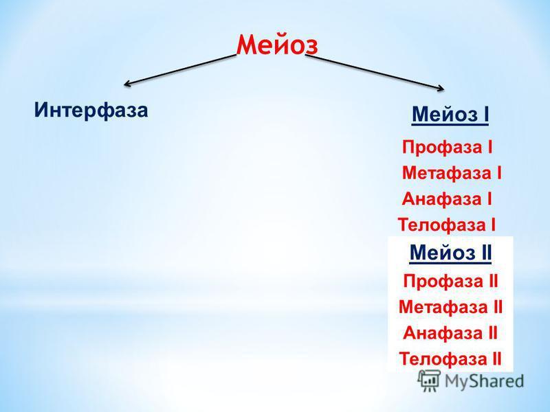 Соматические В гомологичных хромосомах, гены отвечающие за один и тот же признак находятся в одном и том же месте – локусе. Такие гены называются аллельными. У человека в соматических клетках 2n = 46; У мухи дрозофилы 2n = 8; У гороха 2n = 14. Половы