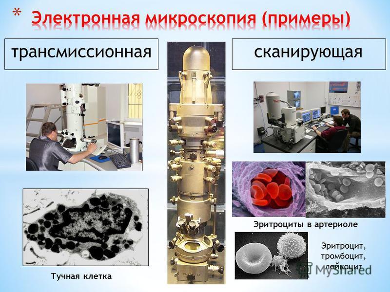 1. Основание микроскопа 2. Тубусодержатель 3. Тубус 4. Окуляр (чаще ×7) 5. Револьвер микроскопа 6. Объективы а) сухие: ×8, ×20, ×40 б) иммерсионный ×90 7. Предметный столик 8. Конденсор 9. Макрометрический винт 10. Микрометрический винт 11. Винт конд