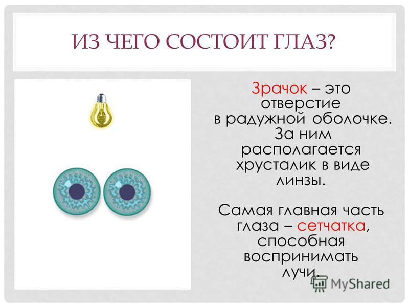 ИЗ ЧЕГО СОСТОИТ ГЛАЗ? Зрачок – это отверстие в радужной оболочке. За ним располагается хрусталик в виде линзы. Самая главная часть глаза – сетчатка, способная воспринимать лучи.