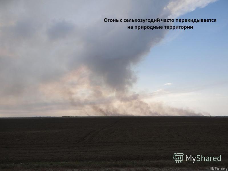 Огонь с сельхозугодий часто перекидывается на природные территории
