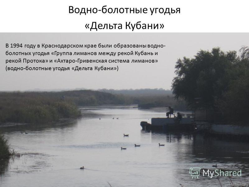 Водно-болотные угодья «Дельта Кубани» В 1994 году в Краснодарском крае были образованы водно- болотных угодья «Группа лиманов между рекой Кубань и рекой Протока» и «Ахтаро-Гривенская система лиманов» (водно-болотные угодья «Дельта Кубани»)