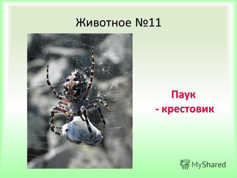 Животное 11 Паук - крестовик - крестовик