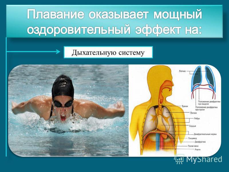 Дыхательную систему