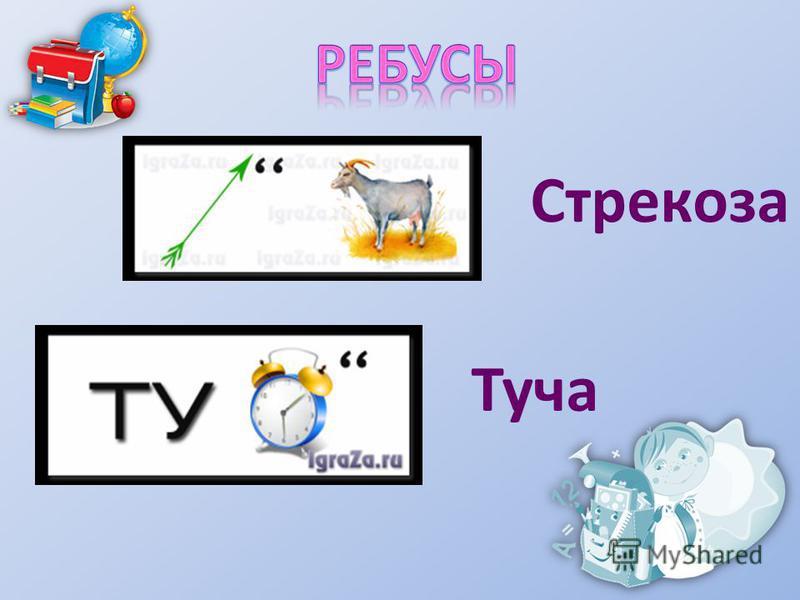 Стрекоза Туча