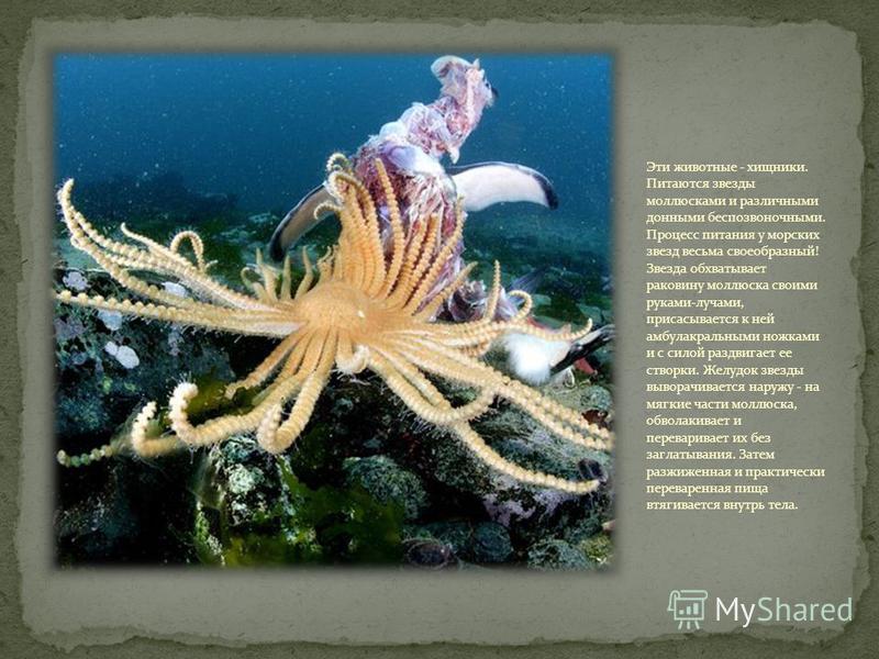 Морские звезды - очень подвижные животные, но они умеют только быстро ползать по дну, а вот плавать они не могут.