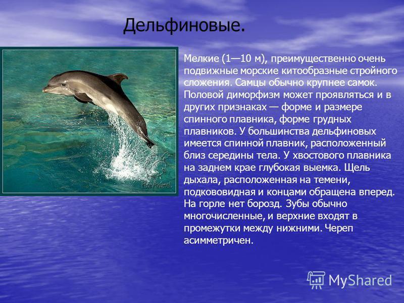 Дельфиновые. Мелкие (110 м), преимущественно очень подвижные морские китообразные стройного сложения. Самцы обычно крупнее самок. Половой диморфизм может проявляться и в других признаках форме и размере спинного плавника, форме грудных плавников. У б