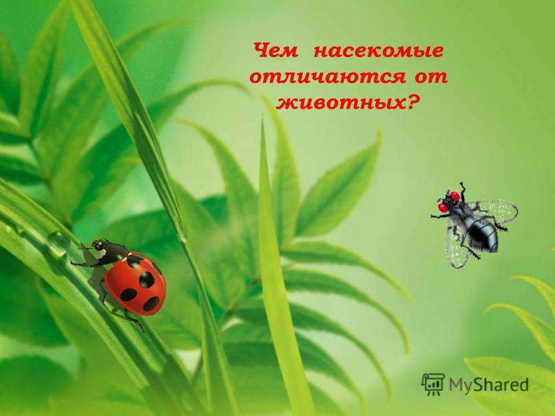 Чем насекомые отличаются от животных?