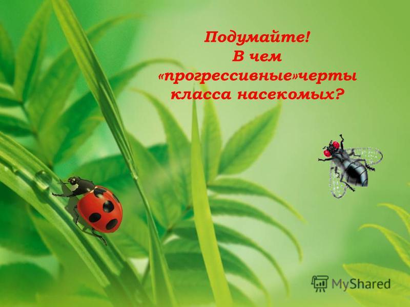 Подумайте! В чем «прогрессивные»черты класса насекомых?