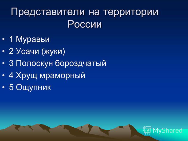 Представители на территории России 1 Муравьи 2 Усачи (жуки) 3 Полоскун бороздчатый 4 Хрущ мраморный 5 Ощупник
