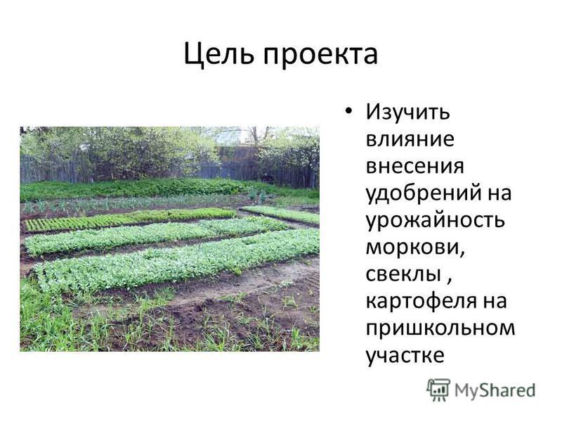 Цель проекта Изучить влияние внесения удобрений на урожайность моркови, свеклы, картофеля на пришкольном участке