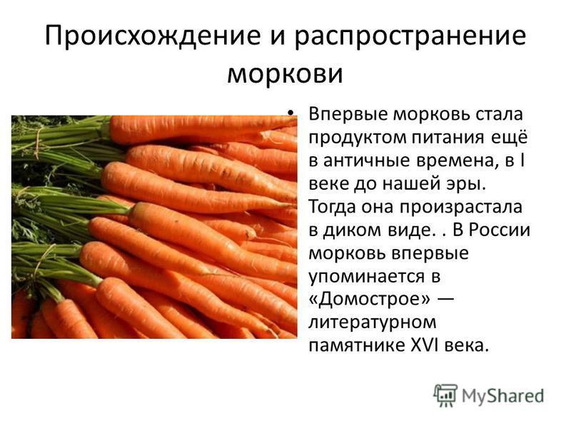 Происхождение и распространение моркови Впервые морковь стала продуктом питания ещё в античные времена, в I веке до нашей эры. Тогда она произрастала в диком виде.. В России морковь впервые упоминается в «Домострое» литературном памятнике XVI века.