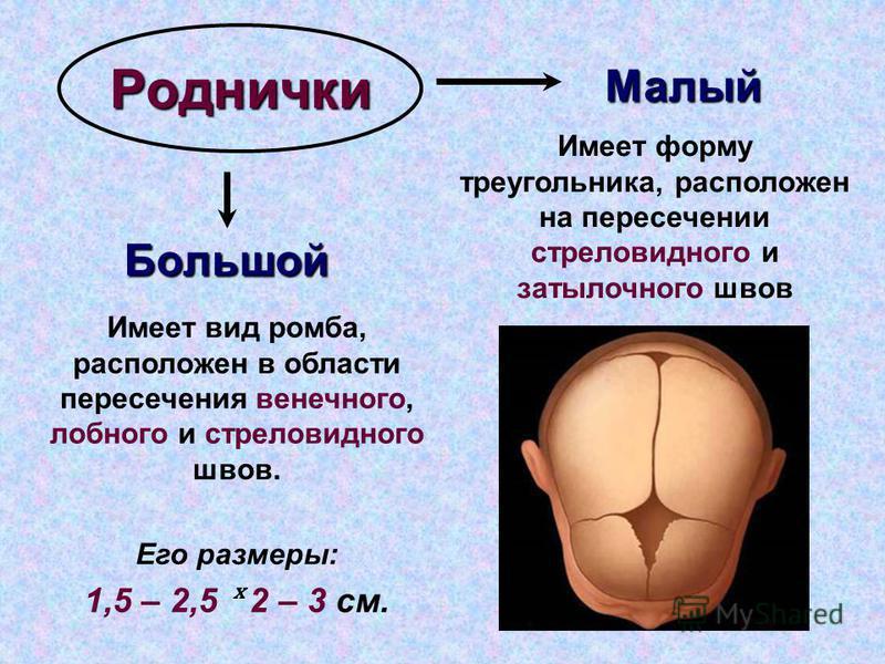 Роднички Большой Малый Имеет вид ромба, расположен в области пересечения венечного, лобного и стреловидного швов. Его размеры: 1,5 – 2,5 ˣ 2 – 3 см. Имеет форму треугольника, расположен на пересечении стреловидного и затылочного швов