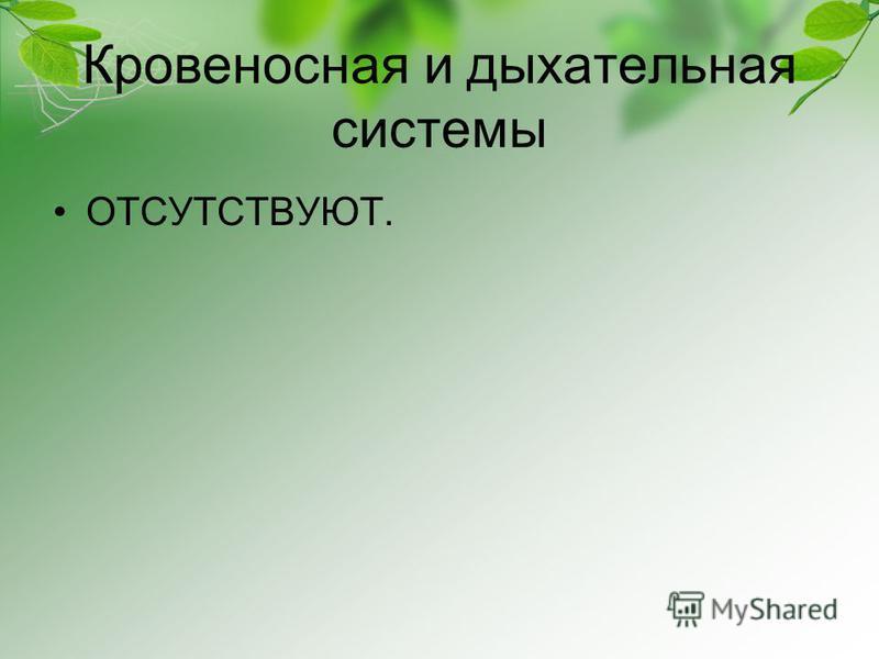 Кровеносная и дыхательная системы ОТСУТСТВУЮТ.
