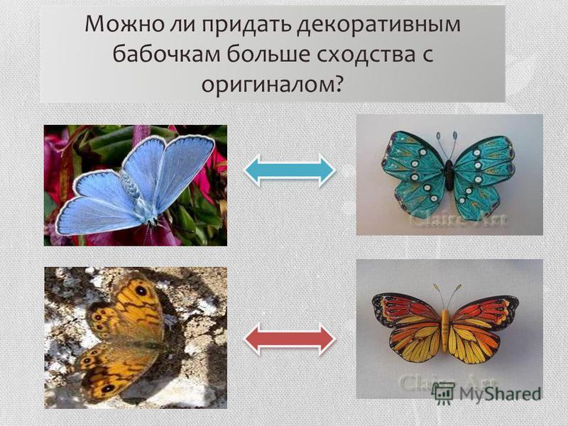 Можно ли придать декоративным бабочкам больше сходства с оригиналом?