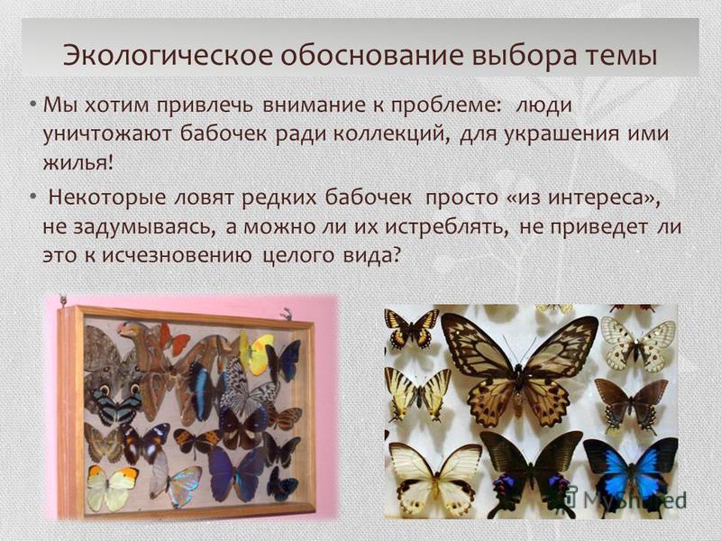 Экологическое обоснование выбора темы Мы хотим привлечь внимание к проблеме: люди уничтожают бабочек ради коллекций, для украшения ими жилья! Некоторые ловят редких бабочек просто «из интереса», не задумываясь, а можно ли их истреблять, не приведет л