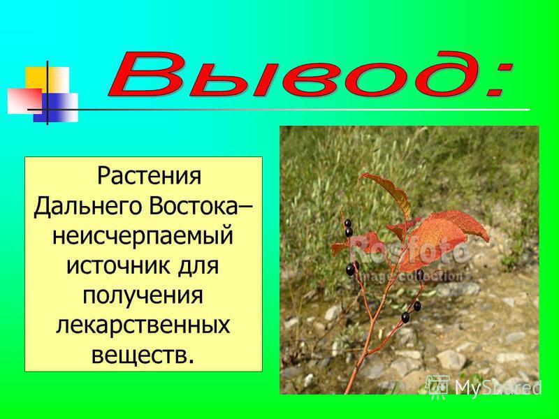 Растения Дальнего Востока– неисчерпаемый источник для получения лекарственных веществ.