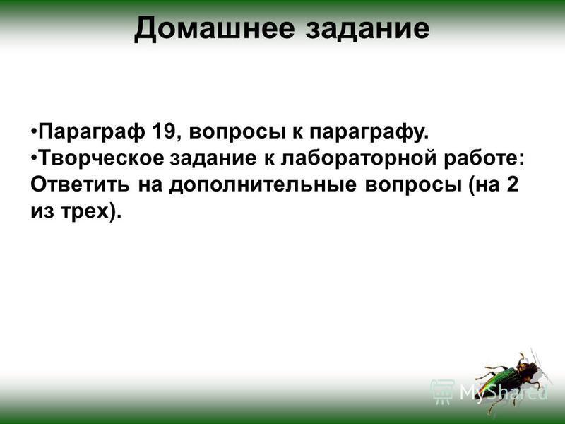 Домашнее задание Параграф 19, вопросы к параграфу. Творческое задание к лабораторной работе: Ответить на дополнительные вопросы (на 2 из трех).