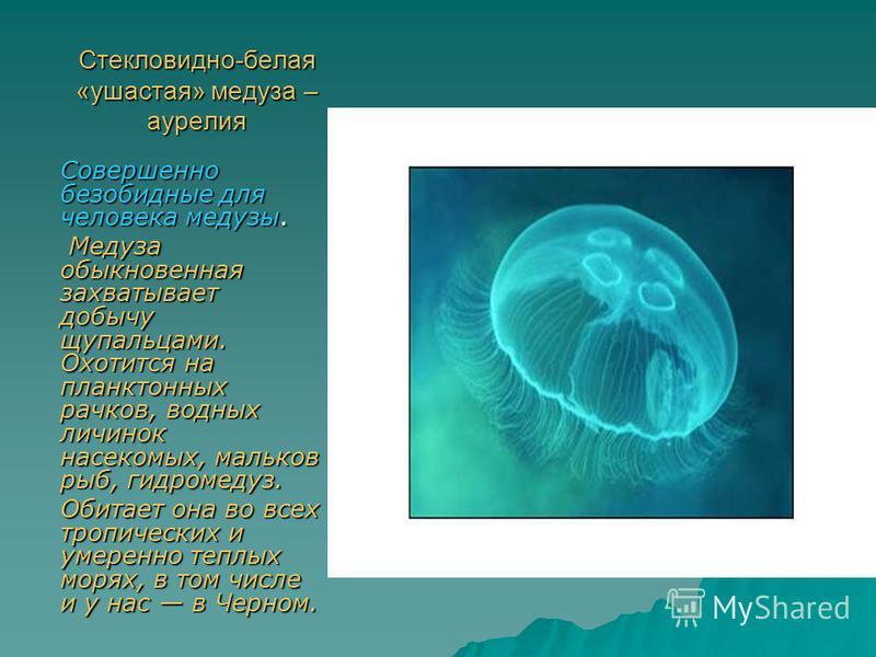 Стекловидно-белая «ушастая» медуза – аурелия Совершенно безобидные для человека медузы. Медуза обыкновенная захватывает добычу щупальцами. Охотится на планктонных рачков, водных личинок насекомых, мальков рыб, гидромедуз. Медуза обыкновенная захватыв