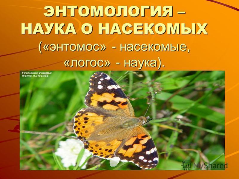 ЭНТОМОЛОГИЯ – НАУКА О НАСЕКОМЫХ («энтомоз» - насекомые, «логос» - наука).