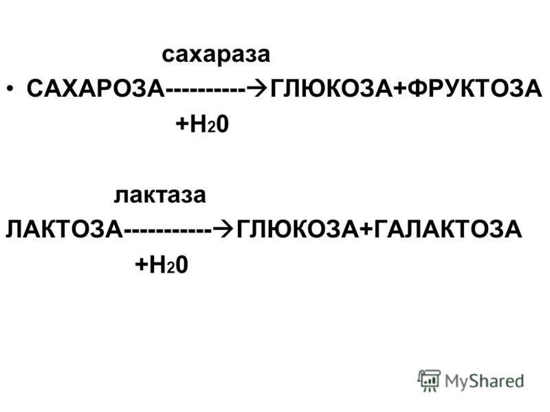 сахараза САХАРОЗА---------- ГЛЮКОЗА+ФРУКТОЗА +Н 2 0 лактаза ЛАКТОЗА----------- ГЛЮКОЗА+ГАЛАКТОЗА +Н 2 0