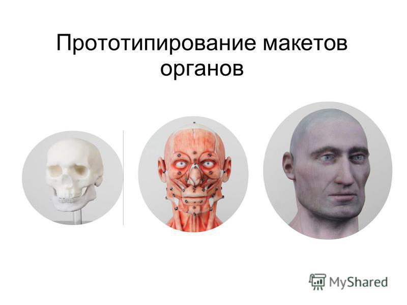 Прототипирование макетов органов