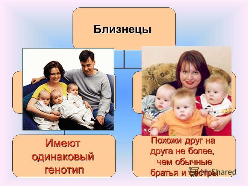Близнецы Идентичные(монозиготные, однояйцевые однояйцевые)Неидентичные(дизиготные,разнояйцовые) Имеютодинаковыйгенотип Похожи друг на друга не более, чем обычные братья и сестры