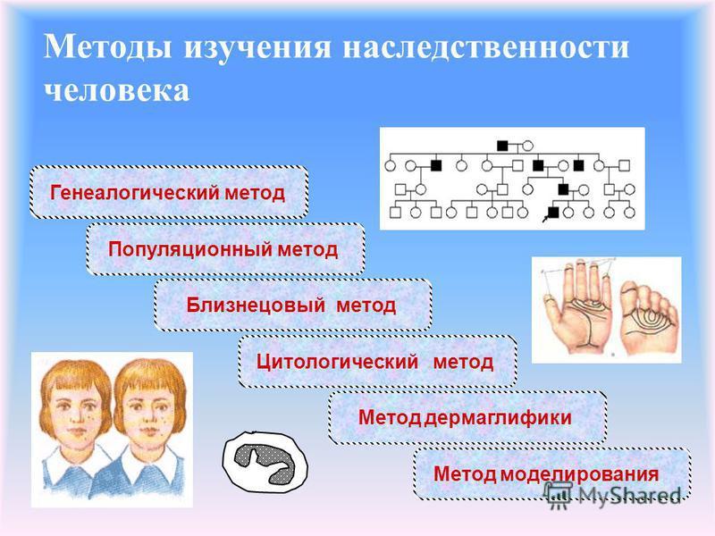 Методы изучения наследственности человека Генеалогический метод Популяционный метод Близнецовый метод Цитологический метод Метод дерматоглифики Метод моделирования