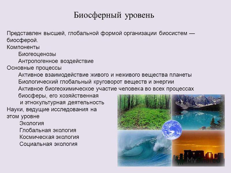 Биосферный уровень Представлен высшей, глобальной формой организации биосистем биосферой. Компоненты Биогеоценозы Антропогенное воздействие Основные процессы Активное взаимодействие живого и неживого вещества планеты Биологический глобальный круговор