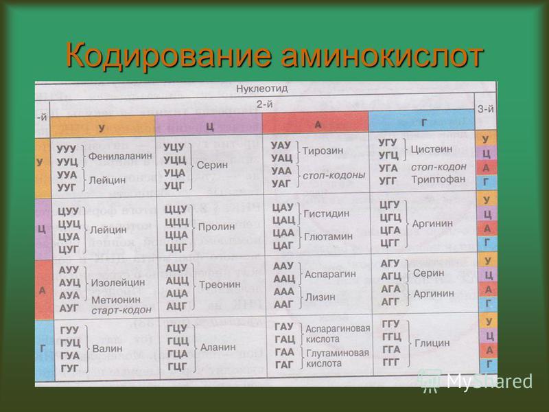 Кодирование аминокислот