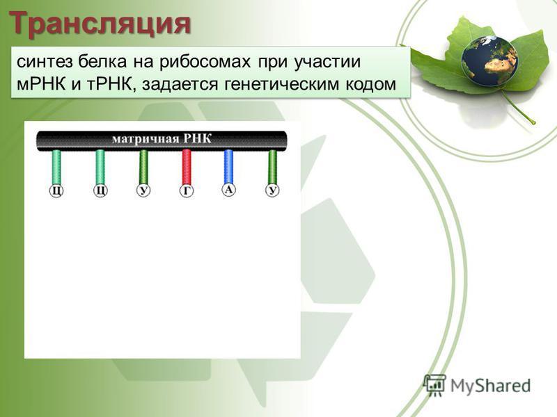 Трансляция синтез белка на рибосомах при участии мРНК и тРНК, задается генетическим кодом