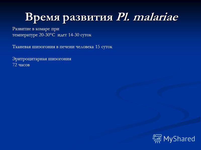Время развития Pl. malariae Развитие в комаре при температуре 20-30°С идет 14-30 суток Тканевая шизогония в печени человека 15 суток Эритроцитарная шизогония 72 часов