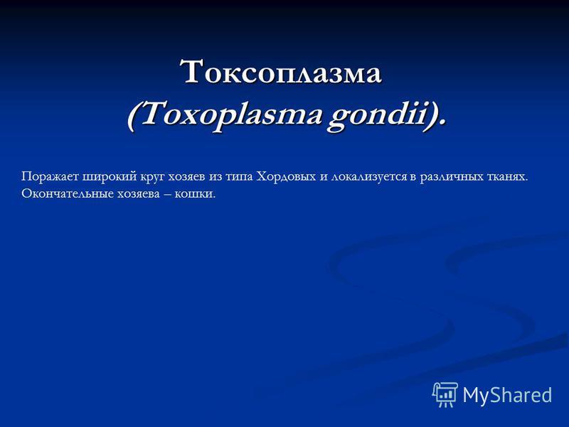 Токсоплазма (Toxoplasma gondii). Поражает широкий круг хозяев из типа Хордовых и локализуется в различных тканях. Окончательные хозяева – кошки.