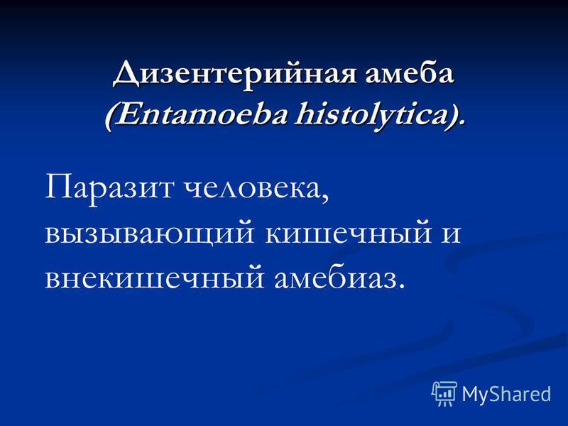 Дизентерийная амеба (Entamoeba histolytica ). Паразит человека, вызывающий кишечный и внекишечный амебиаз.