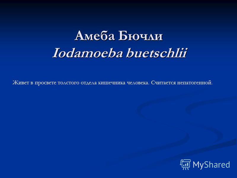 Амеба Бючли Iodamoeba buetschlii Живет в просвете толстого отдела кишечника человека. Считается непатогенной.