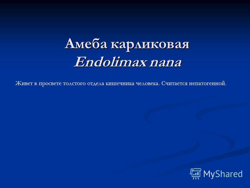 Амеба карликовая Endolimax nana Живет в просвете толстого отдела кишечника человека. Считается непатогенной.