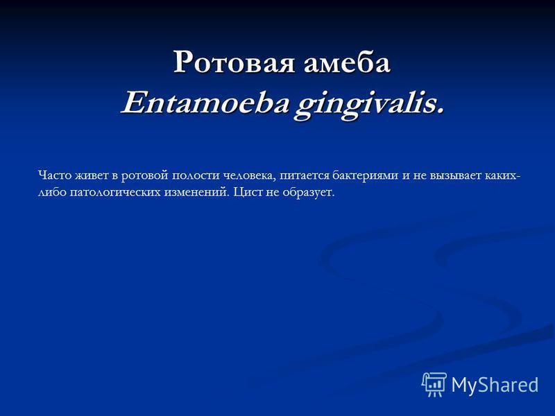 Ротовая амеба Entamoeba gingivalis. Часто живет в ротовой полости человека, питается бактериями и не вызывает каких- либо патологических изменений. Цист не образует.