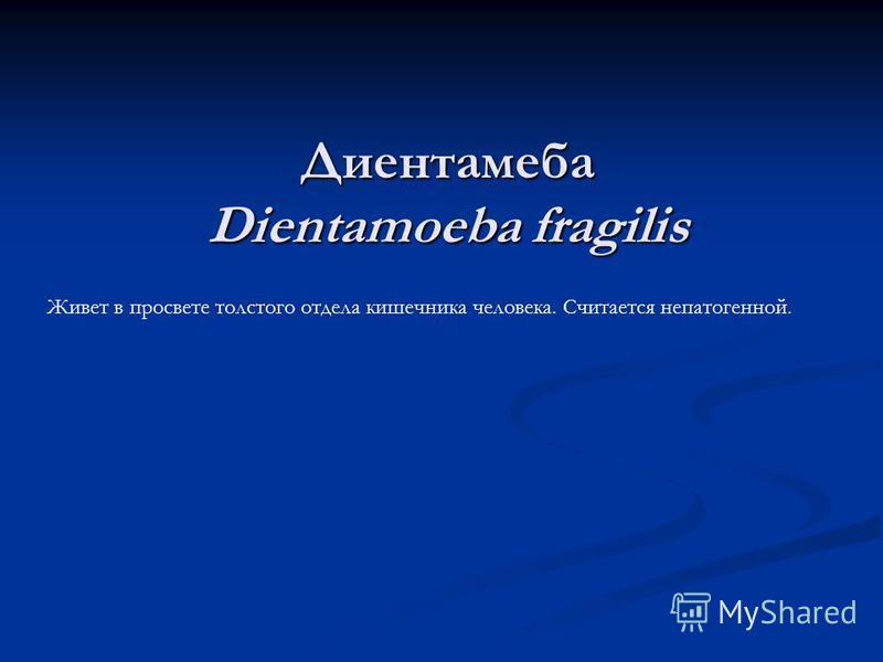 Диентамеба Dientamoeba fragilis Живет в просвете толстого отдела кишечника человека. Считается непатогенной.