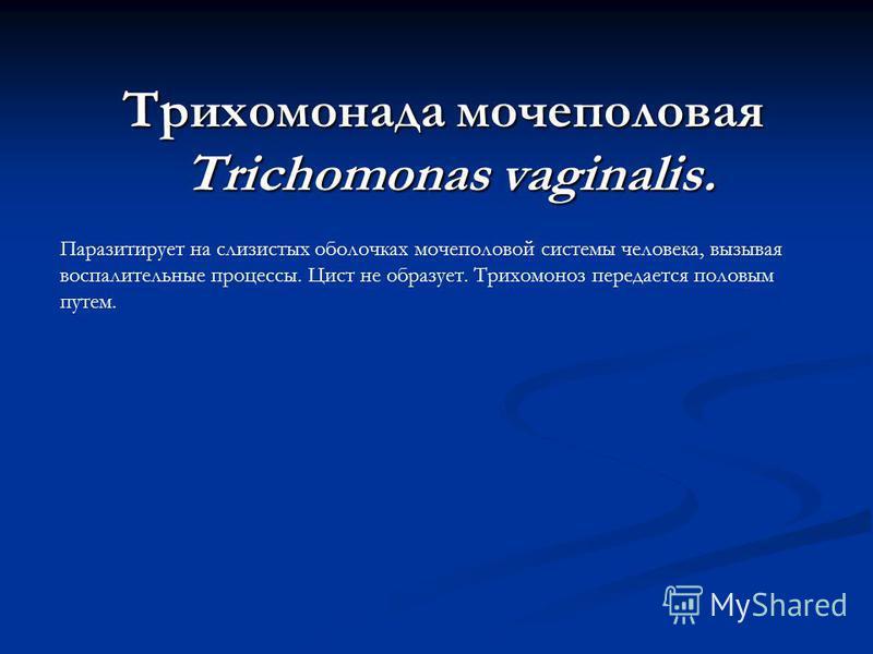 Трихомонада мочеполовая Trichomonas vaginalis. Паразитирует на слизистых оболочках мочеполовой системы человека, вызывая воспалительные процессы. Цист не образует. Трихомоноз передается половым путем.