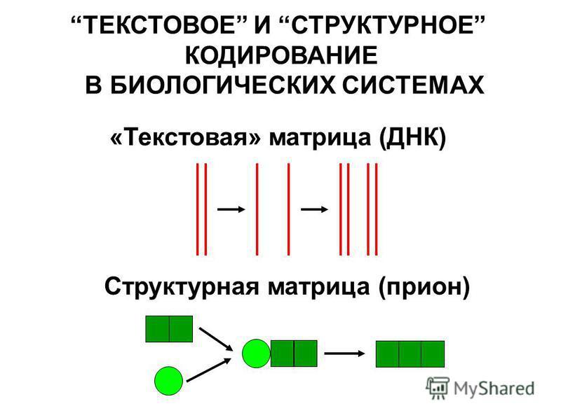 «Текстовая» матрица (ДНК) ТЕКСТОВОЕ И СТРУКТУРНОЕ КОДИРОВАНИЕ В БИОЛОГИЧЕСКИХ СИСТЕМАХ Структурная матрица (притон)